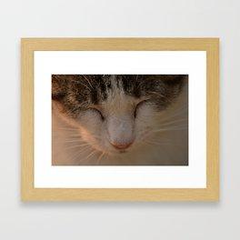 Purr Framed Art Print