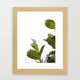 Fiddle Leaf Fig  |  The Houseplant Collection Framed Art Print