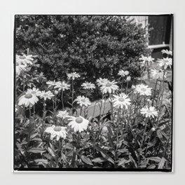 flowers in the garden, june 2018 Canvas Print