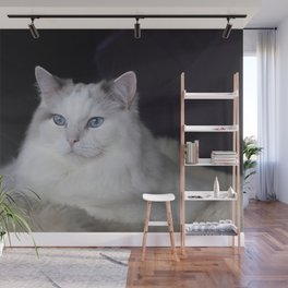 Ragdoll Cat Her Majesty Wall Mural