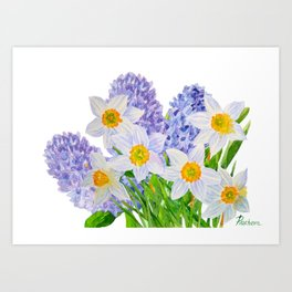 Background with  hyacinth  and narcissus Art Print