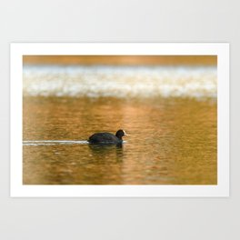 swimming trough gold Art Print