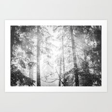 Forest Trees - Black and White Magical Woods Art Print