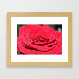 Rose Water Framed Art Print