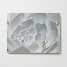 Succulent in the Sun Metal Print