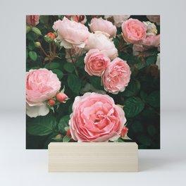 Dark Rose Mini Art Print