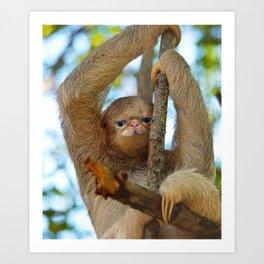 Coth Cat Sloth Hybrid Art Print