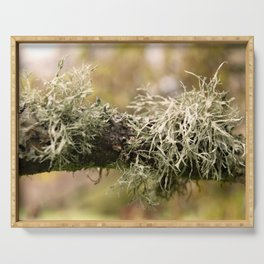Close up of a branch with moss Serving Tray
