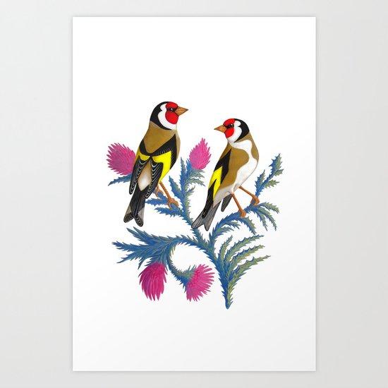 carduelis carduelis (euro goldfinch) Art Print