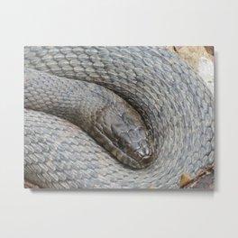 Sleeping Serpent Metal Print