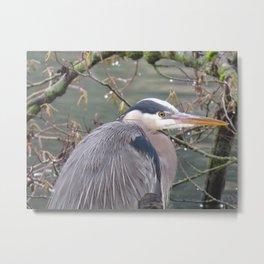 Blue Heron in Tacoma Washington at Ruston Way Metal Print