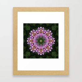 Constellation of Verbena flowers mandala Verbena bonariensis 1829 k2 Framed Art Print