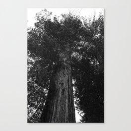 Sequoia National Park IV Canvas Print