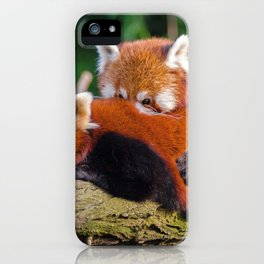 Two Super Cute Little Red Panda Bears Cuddling On Tree Branch Close Up Ultra HD iPhone Case