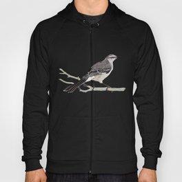 Northern mockingbird - Cenzontle - Mimus polyglottos Hoody