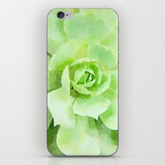 Lime Succulent Plant iPhone & iPod Skin