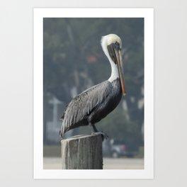 Regal Brown Pelican on Wooden Post Art Print
