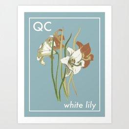 Provincial Flowers - Quebec Art Print