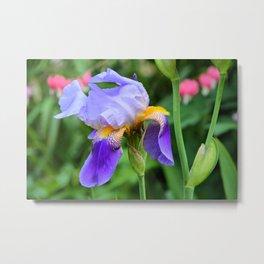 Rescue Iris Metal Print