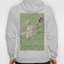 Baby Canadian Geese, Wild Geese, Animals in the Wild Hoody