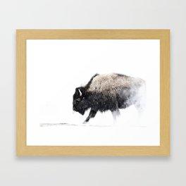 Prancing Buffalo Framed Art Print