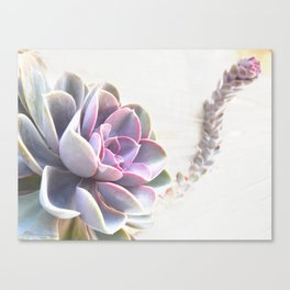 pink succulent plant Canvas Print