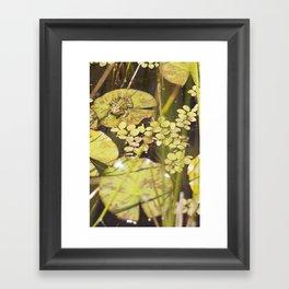 frogger... Framed Art Print