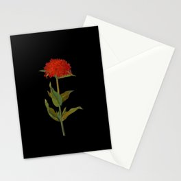 Lychnis Chalcedonica Mary Delany Delicate Paper Flower Collage Black Background Floral Botanical Stationery Cards