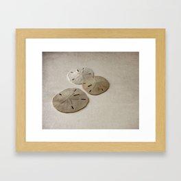 Vintage Sand Dollars Framed Art Print