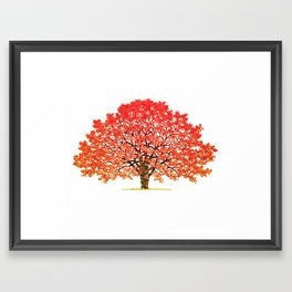 Japanese Maple 1 Framed Art Print