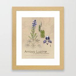 Arroyo Lupine Framed Art Print
