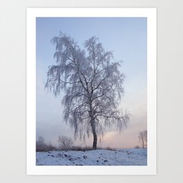 Snowy Birch Art Print