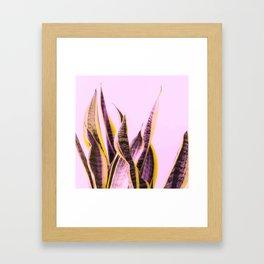 Long Leaves Plant On Pink Background #decor #society6 #buyart Framed Art Print