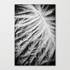 Wet Dream Canvas Print