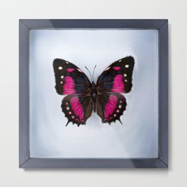 Digital Paint (Butterfly in Frame) Metal Print