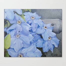 Blue Clematis Flowers on Knotted Fence Post Canvas Print