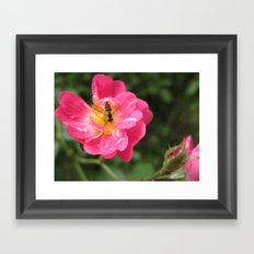 Flower Bee Framed Art Print