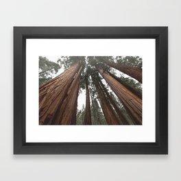 Sky Climbers - Sequoia Framed Art Print