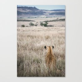 Lioness sits and waits for prey Canvas Print