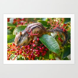 Stuffing His Face Art Print