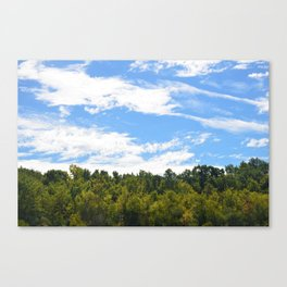 The Trees Above Canvas Print