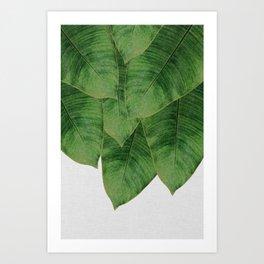 Banana Leaf III Art Print