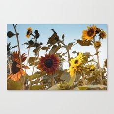 Red Sunflower... Canvas Print