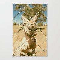 kangaroo Canvas Prints featuring Kangaroo by Ellenor Argyropoulos