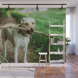 Fetch (Color) Wall Mural