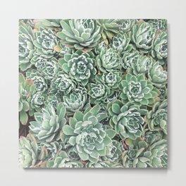 Succulent Bed Metal Print