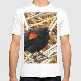 Juvenile Male Redwing Blackbird T-shirt