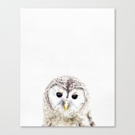 Owl, Baby, Animal, ZOO, Nursery, Minimal, Modern, Wall art Art Print Canvas Print