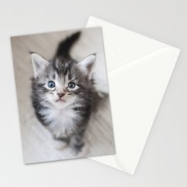 Curious kitten Stationery Cards