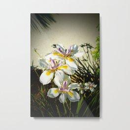 African White Iris DPGP160719a Metal Print